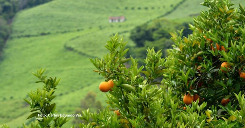 Carlinhos laranja